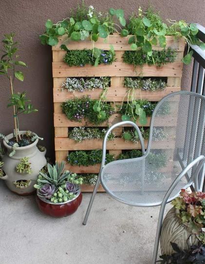 Ideas for a vertical garden