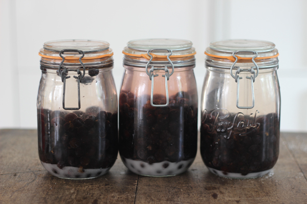 DIY sloe gin | Growing Spaces