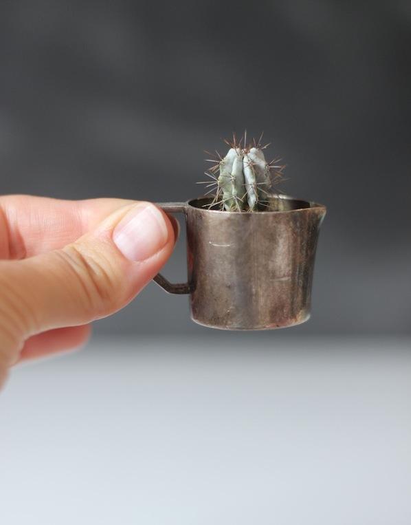 Cute cactus | Growing Spaces