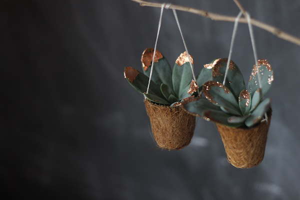 Blinged up succulents | Growing Spaces