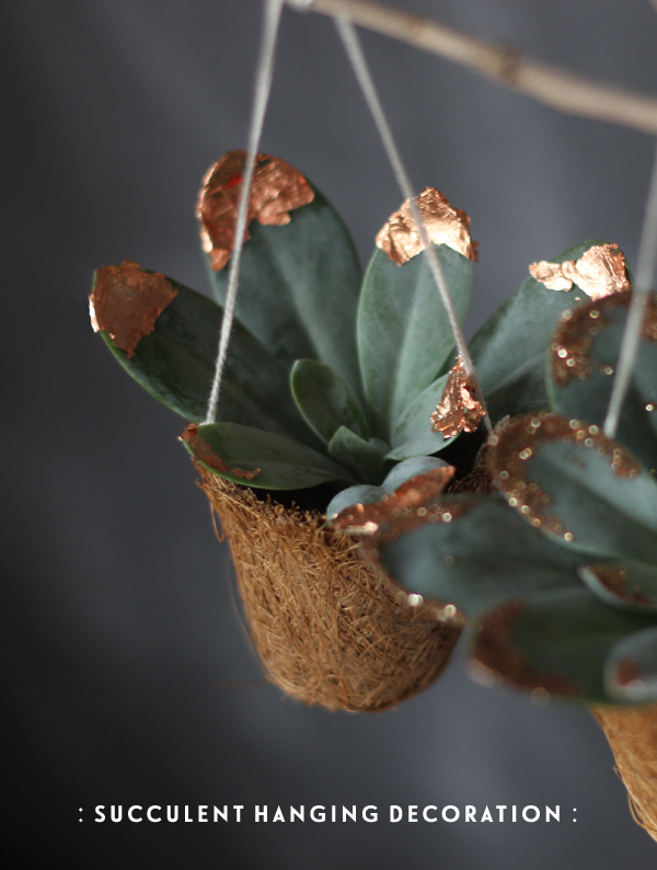 Succulent hanging decoration | Growing Spaces