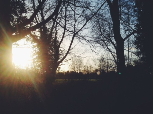 Sun up | Growing Spaces