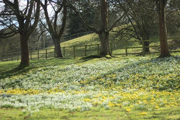 Spring flowers | Growing Spaces