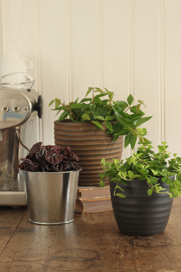 Indoor plants from Homebase | Growing Spaces