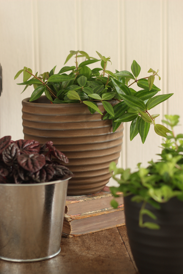 Pot plants | Growing Spaces