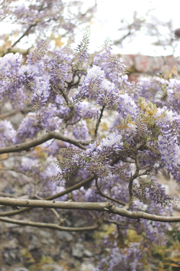 Wisteria garden | Growing Spaces