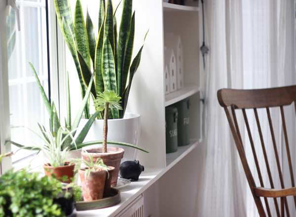 Window ledge for houseplants | Growing Spaces