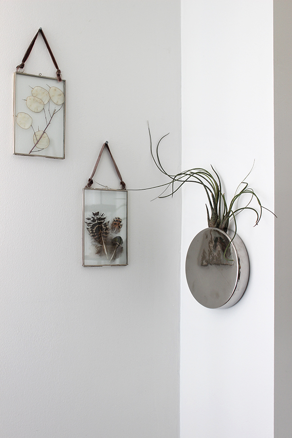 Decorating with air plants growing spaces for Dot wall vase