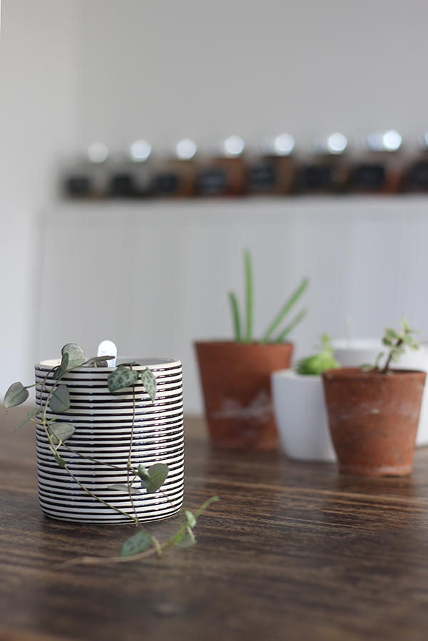 kitchen plants for Urban Jungle Bloggers | Growing Spaces