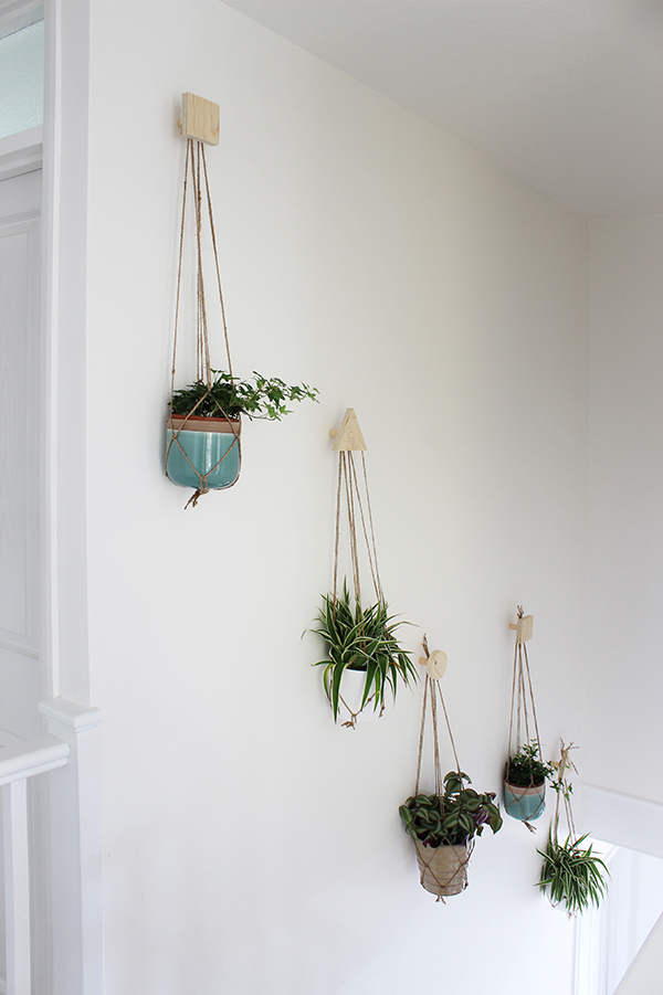 How to create a wall of plants