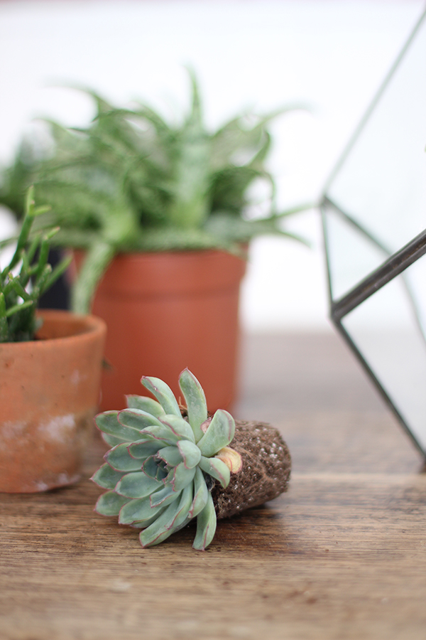 planting a terrarium | Growing Spaces