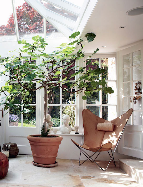Conservatory style | Growing Spaces