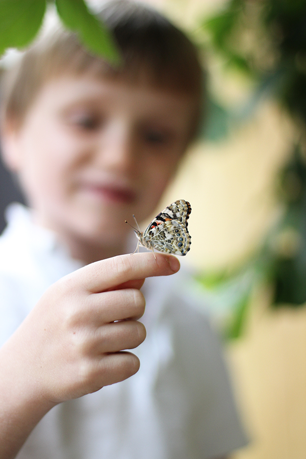 Butterfly conservation with B&Q