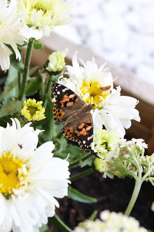Butterflies with B&Q | Growing Spaces