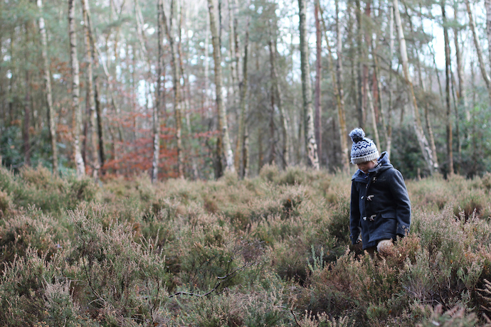 A stomp in the woods | Growing Spaces
