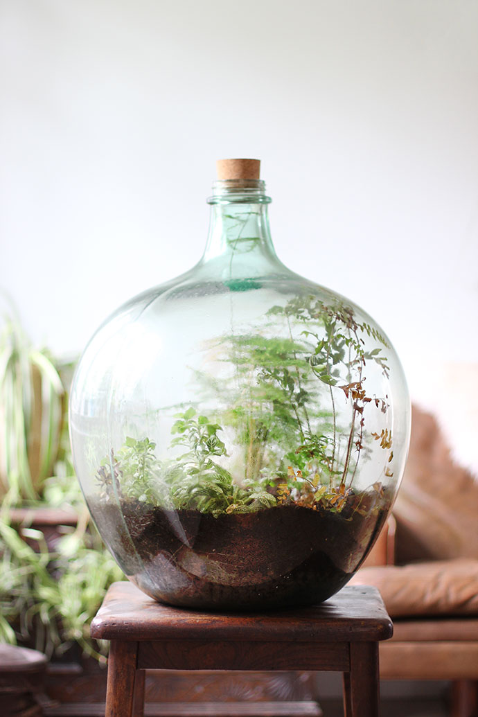 How to plant up a closed carboy bottle terrarium